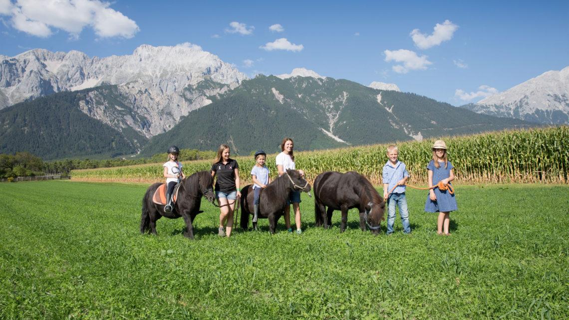Schwarz Familie Natur Pony