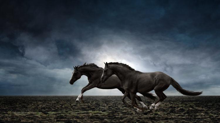 Boxstring Bett Bed Pferde Schlafen Komfort Naturmaterialien