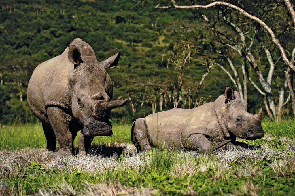 Globus Reisen Afrika Safari Wildtiere Reservate