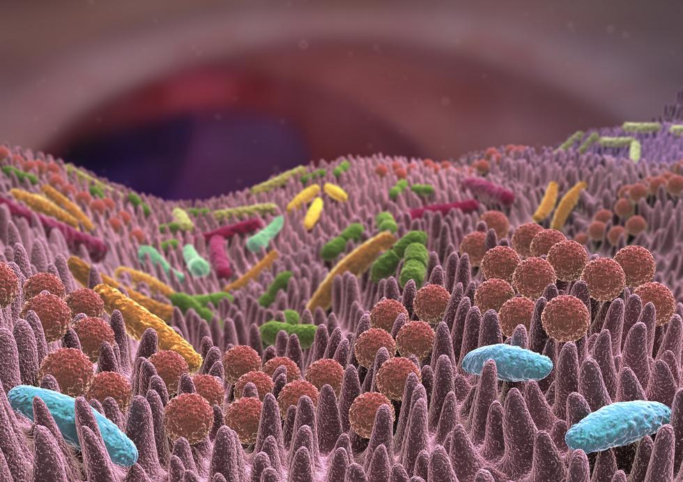 Propicum Ballaststoffe Fotalia Bakterien