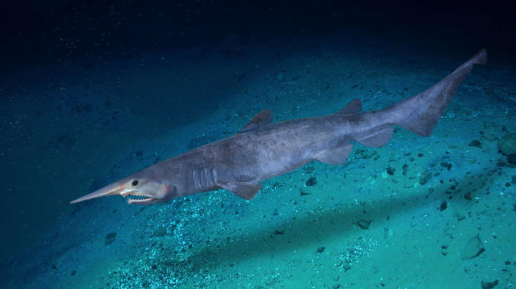 Sharkproject Paulo Oliveira