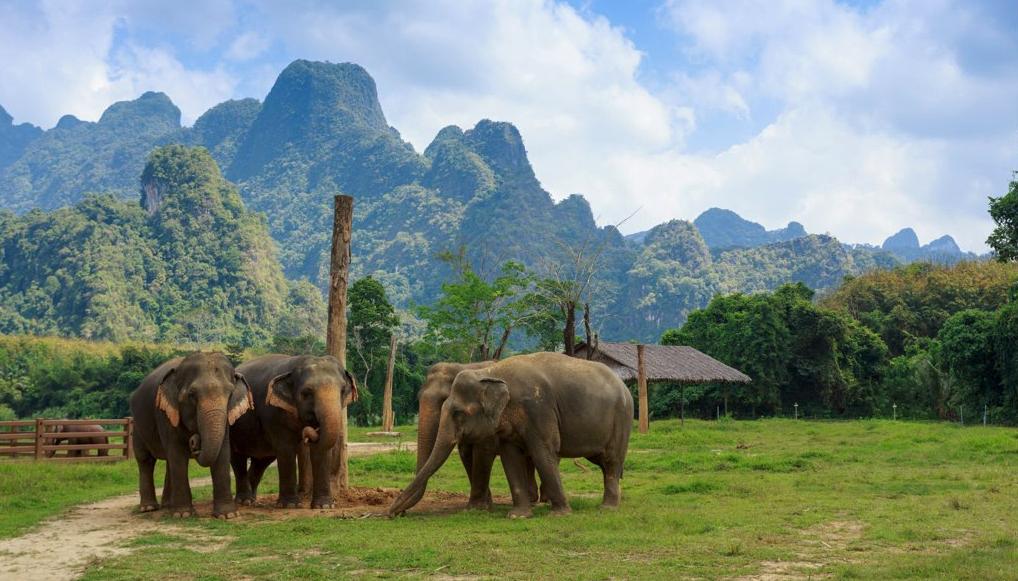 Elephant Hills Resort Thailand Elephants