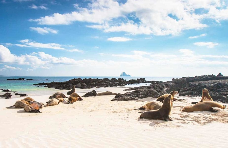 Inseln Bucketlist Galapagos Ecuador_c_Flash Pack worldofwellness